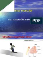 287-Sistemul Muscular Final.ppt