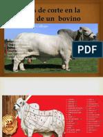 Tipos de Corte en La Carne de Un Bovino 2018 1293[1]