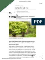 7- 10 Copaci Mari Pentru Curți Mici TreeHugger
