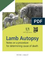 Lamb Autopsy