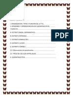 Histologia de La Píel