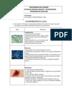 Biol Vegetal Taller n.1 Algas