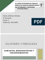 Anatomía y Fisiología de Los Sistemas Digestivos