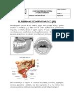 Documento Componentes Del Sistema Estomatognatico