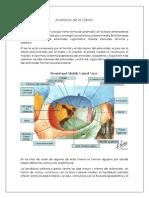 Anatomía de La Orbita