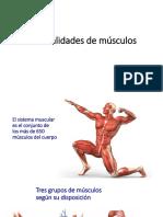 Generalidades de Músculos