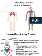 Cardiovascular and Respiratory System
