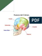 Dibujos Anatomia