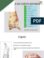 Presentacion-Músculos de Cortes Bovinos