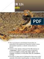 Chapter 13 Arthropods-Torres