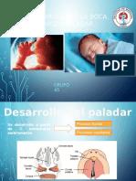 Desarrollo de La Boca, Nariz y Paladar