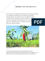 Cultivo de Ají Picante