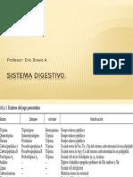 Sistema digestivo 4tomedio electivoo