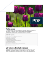 Documento (3) (1)tulipanes zene.docx
