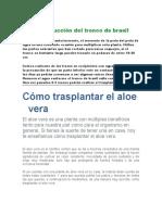 Reproducción Del Tronco de Brasil