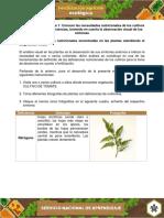 Evidencia Registro Fotografico Indicar Las Deficiencias Nutricionales Encontradas en Plantas (1)