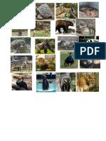 Animales de Zoollogico