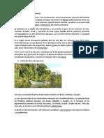 Qué Es La Selva Peruana