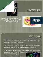 PRESENTACION ENZIMAS