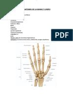 Apuntes Anatomia y Fisiologia Del Sistema Musculoesqueletico Anatomia de La Mano y Carpo