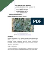 Botanica Trabajo Plantas Medicinales