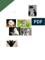 Carmita Gatitos y Perros y Conejos