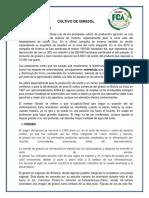 Cultivo de Girasol Informe