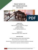 dairy info