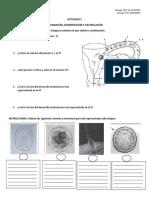 ACTIVIDAD 3 Fecundacion, Segmentacion (1)