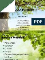 JARINGAN PERIDERM