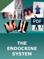 Endocrine System - HS