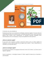 Introducción a la Anatomia Vegetal.docx