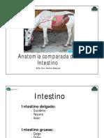 teo intestino comparada2019.pdf