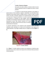 Embriologia  - UPSJB II CICLO