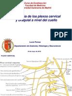Plexo Cervical Diapos