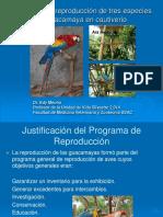 REPRODUCCION_DE_GUACAMAYAS-converted.pdf