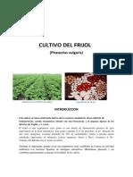 Cultivo de Frijol en El Norte Del Peru