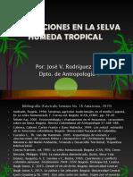 Selva Húmeda Tropical