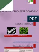 Bacterias Thio- Ferrooxidans
