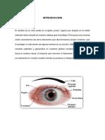 Anatomia Vista