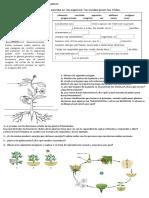 Trabajo Práctico Evaluativo Sobre Plantas