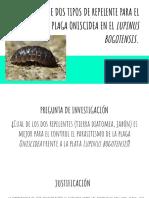 Evaluación de Dos Tipos de Repelente Para El Control de La Plaga Oniscidea en El Lupinus Bogotensis.