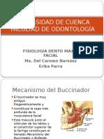 Fisiologiadentomaxilofacial