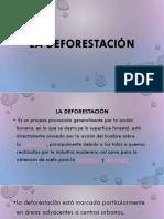 La Deforestación 9 Point