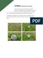 5x5.Piedra Pateda