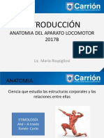 Anatomia Aparato Locomotor