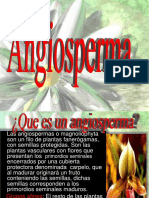 ANGIOSPERMAS..pptx