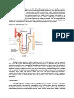 mekanisme urin