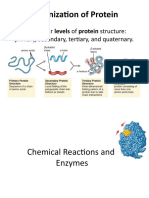 Chemical Reactions and Enzymes (2)