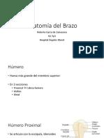 Anatomía Del Brazo